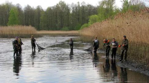 Bio karpfen von kreba fisch ziehen um in anderen teich for Jungfische im teich