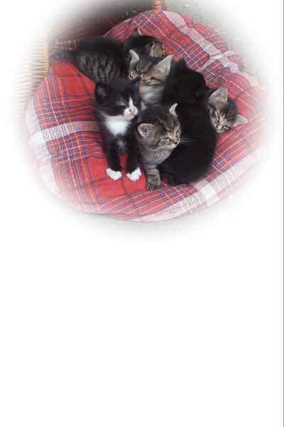 katzenbabys kostenlos